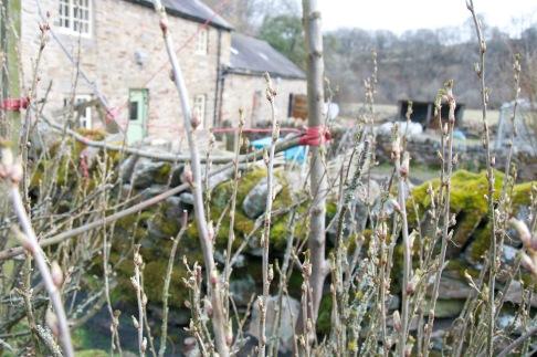 Fruit bushes burst into life