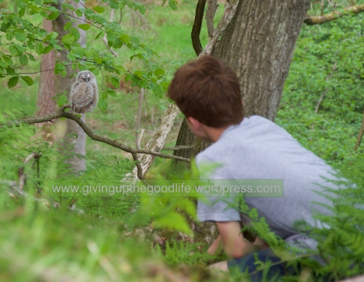 owl & stan watermark
