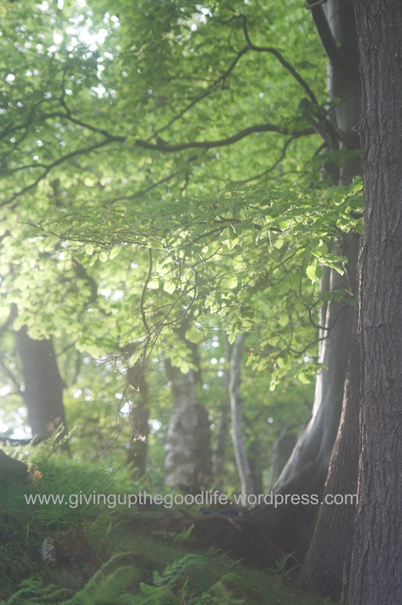 woods watermark