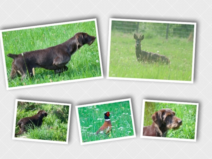 animals in meadow