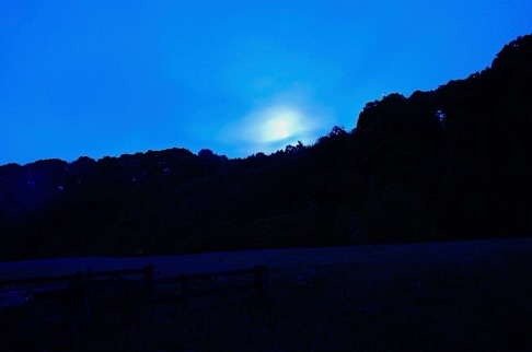 best moon and meadow